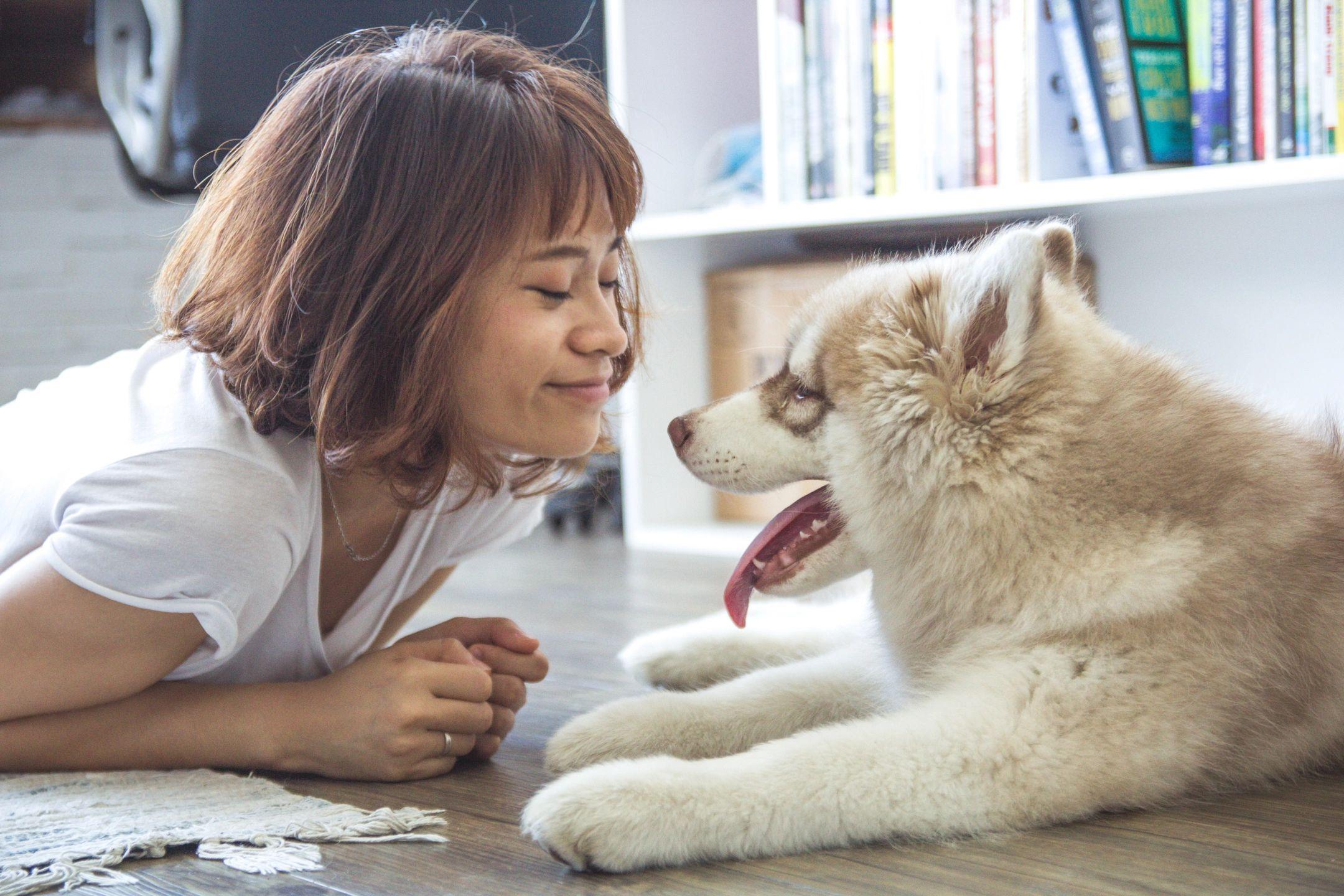 Carpet cleaning pet odor treatment