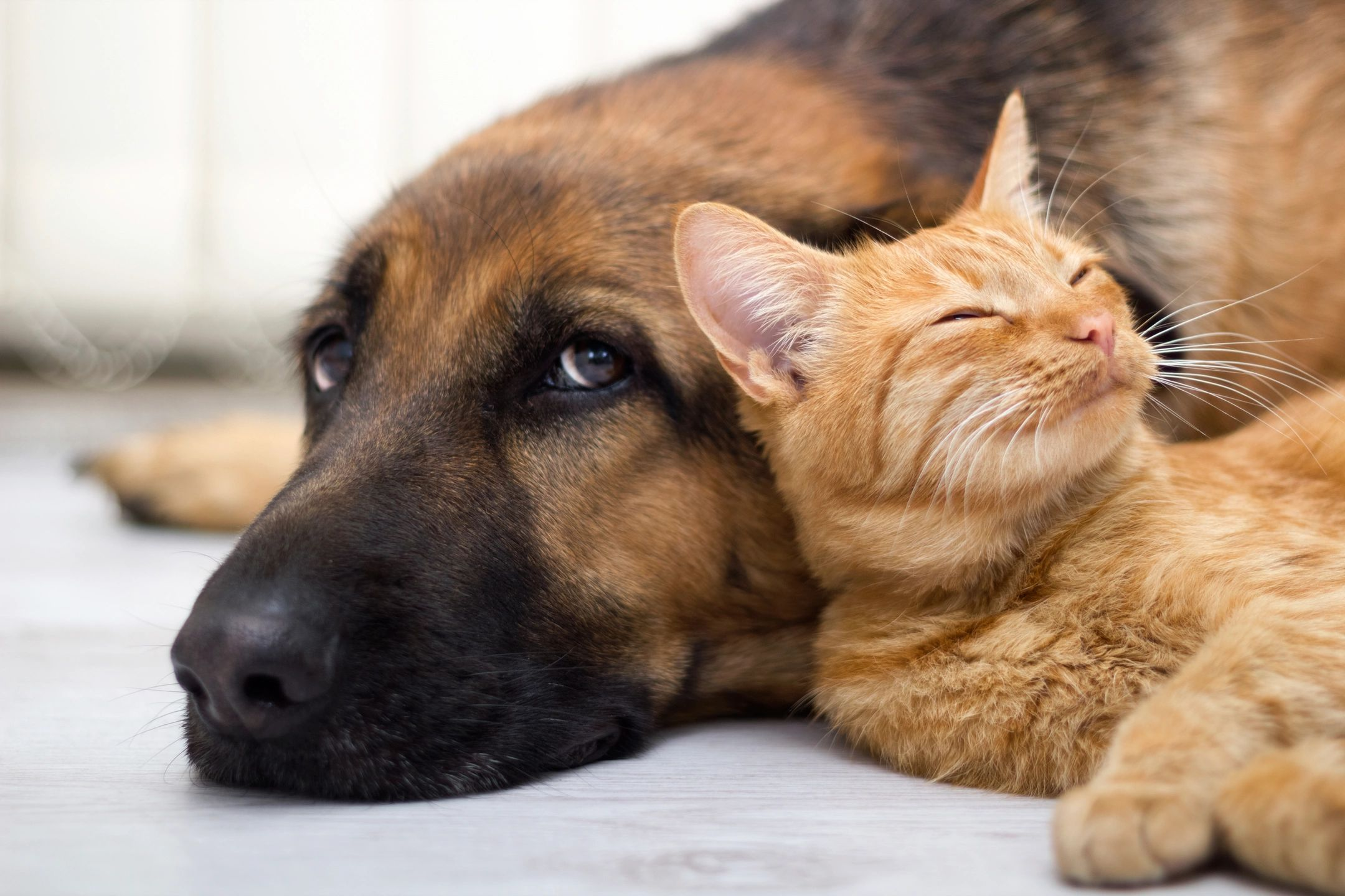 carpet cleaning pet odor